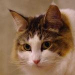 猫の耳の不思議