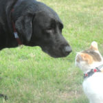 猫のすぐれた鼻の機能の秘密