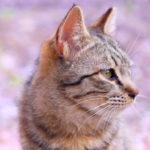 猫のヒゲの不思議