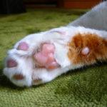猫の足の不思議についてのまとめ