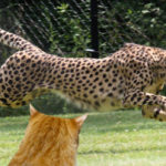 熱中症で動物園の動物もダウン、家猫は大丈夫?
