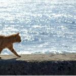 11歳をすぎた猫が夜鳴きをし始めた。老猫の病気の早期発見
