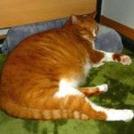 猫の不思議!ゴロゴロ音を鳴らす時の猫の気持ち