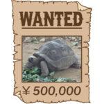行方不明ゾウガメに懸賞金発表、ヒヨリ部隊が狩りに出発だね。