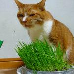 コスパと利便性を考慮して100均で製作した猫草キット