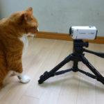 ペットの動画撮影に最適な三脚を発見、専用ホルダーで携帯でも使用可能