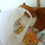 ビニール袋好きな猫とヒョウの顔の違い
