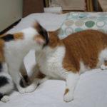猫が毛づくろいをする頻度や個猫差と息を止める方法