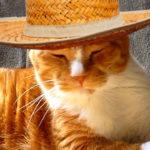 玄関から脱出しようとする猫の対策