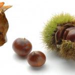 秋の味覚の栗の分類は野菜か果物かカッターか?