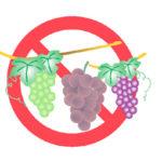 犬や猫が食べてしまったブドウの危険性