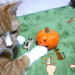 子猫は人を噛むのが仕事なの?猫から傷を負わされて熱がでたら感染かも