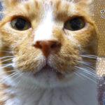 顔の表情が豊かで柔らかく写る写真の角度を猫で検証