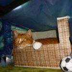 コタツ布団や洗濯物の猫の毛に困らないようにする対策