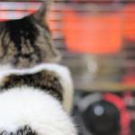 室内で飼っている猫のお留守番の時の暖房対策