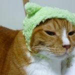 ガチャガチャの猫のかぶりもので、ほーしん状態