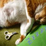 猫と犬の前脚の使い方の違い