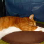 おデブの猫はコタツでの爆睡は注意が必要