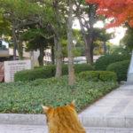 勝鯉の森の優勝記念碑の裏のお話