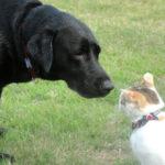 よく吠える犬種の種類とサイレンの音に反応する謎
