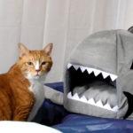 寒いから、猫ハウス購入!食べられる?