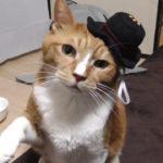 猫に帽子を被せた時の悲劇