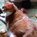猫の体は伸びるらしい!