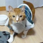猫福袋はちんちくりん