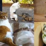 猫の毛柄の不思議