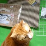 コタツ内の猫用ハウスと出入り口の改良版