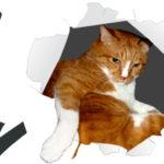 猫に自分の写真を見せてみた反応は?
