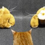 猫を飼っている人はヒゲを保管した事があり・・・ますか?