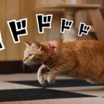 早朝に老猫が走り回って鳴いています、これは・・・