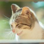 2月の猫は脱走に注意!