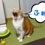 老猫の早朝の発声練習