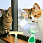 窓ガラスを利用した猫ハウス