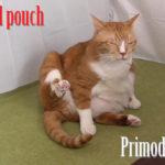 猫のポーチの存在理由