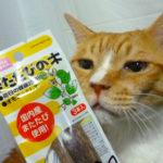 猫のストレス解消にマタタビそれともキャットニップ派?