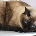 猫を飼ってるとノートパソコンが・・・