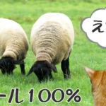 猫がウールを食べる理由