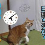 我が家の猫の毎朝のル-ティン