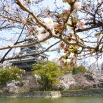 広島城の桜のようす