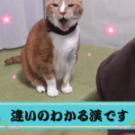 猫の温度探知能力