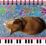 ペットの足音の簡易防音対策