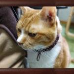 我が家の猫の記憶力や習慣について