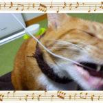 猫がコードを噛むのでワイヤレスイヤホンに!