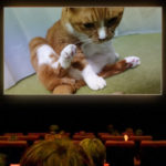 猫にたまに起こる悲劇