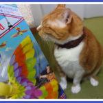 パタパタバードで猫と遊んでみる!