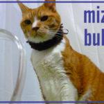 猫の健康維持に水分補給は必須なのですが・・・