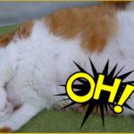 猫のおなかの豆知識